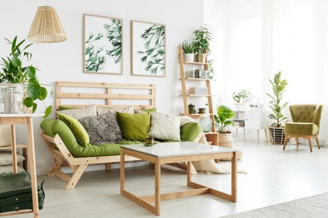 tanaman hias daun indoor