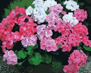 Bunga Geganium