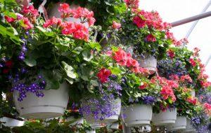 bunga anggrek di pot