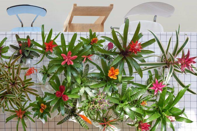 tanaman hias rumah