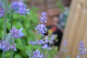 bunga pengusir serangga