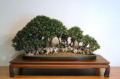Bonsai dengan gaya ini mempunyai filosofi yang begitu mendalam, kekompakan antara seni dan olah pikir serta imajinasi si pembuat sangat berperan besar dalam menghasilkan bonsai dengan gaya ini.