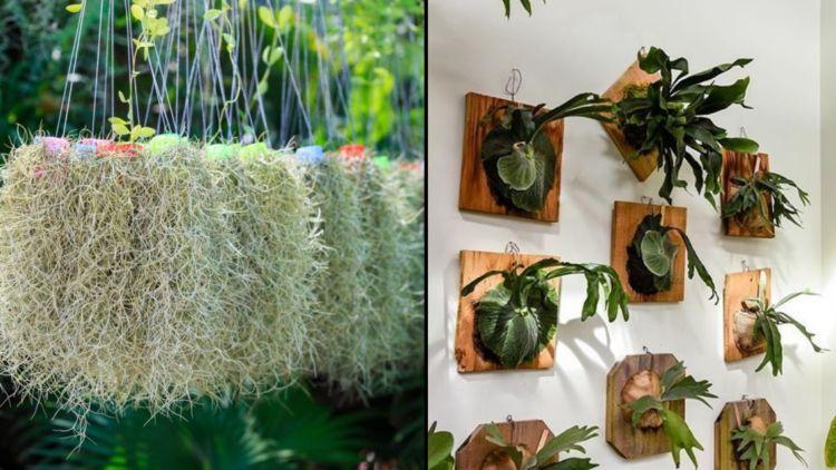 tanaman segar