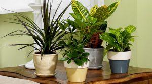 tanaman hias daun yang bagus untuk kesegaran dirumah anda