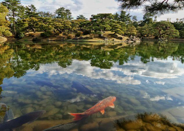 jenis kolam ikan mujair