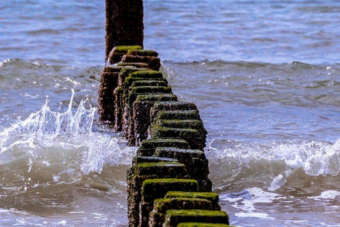 cara budidaya rumput laut gracilaria