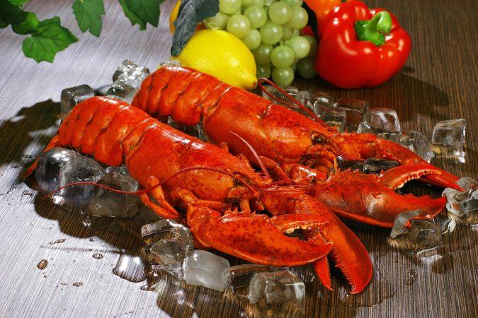 cara budidaya lobster air tawar di kolam terpal