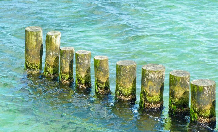 cara budidaya rumput laut nori