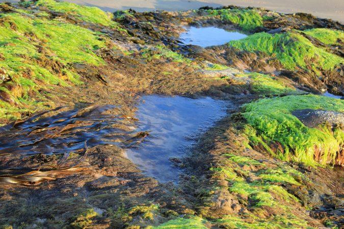 cara budidaya rumput laut yang baik