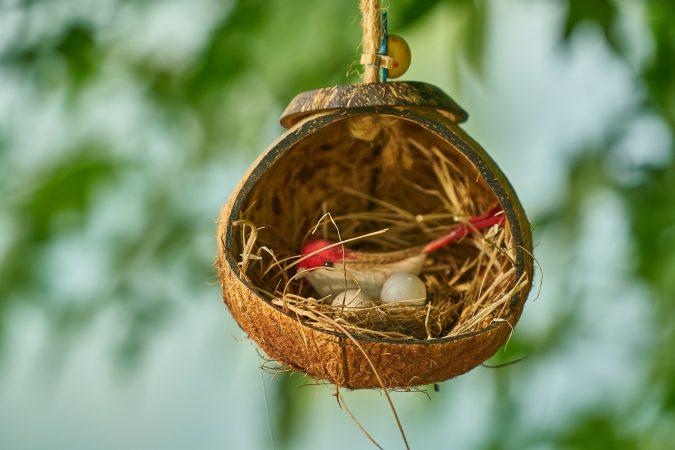 budidaya burung walet sederhana