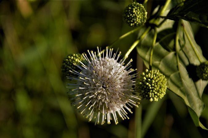 kerajinan dari serat tumbuhan eceng gondok