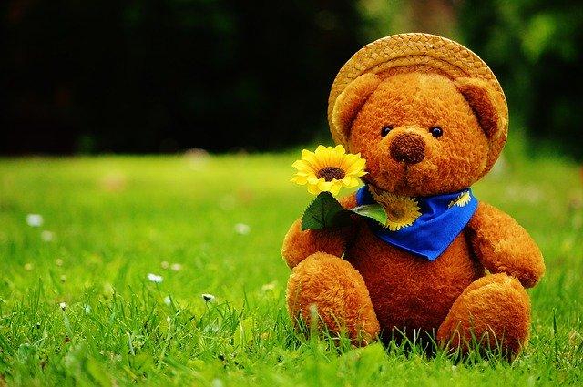 teddy bear adalah